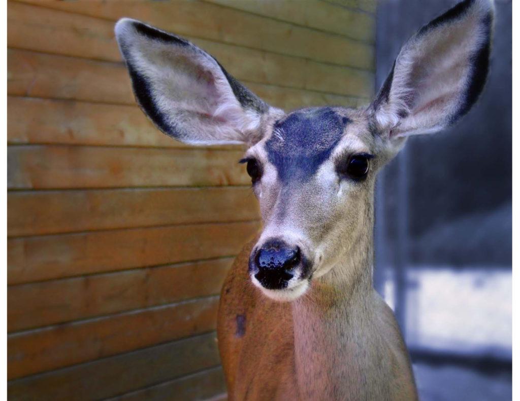 Wildhaven Ranch Wildlife Sanctuary