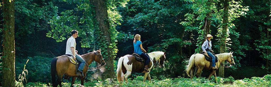 Dogwood Canyon Nature Park Horseback Riding